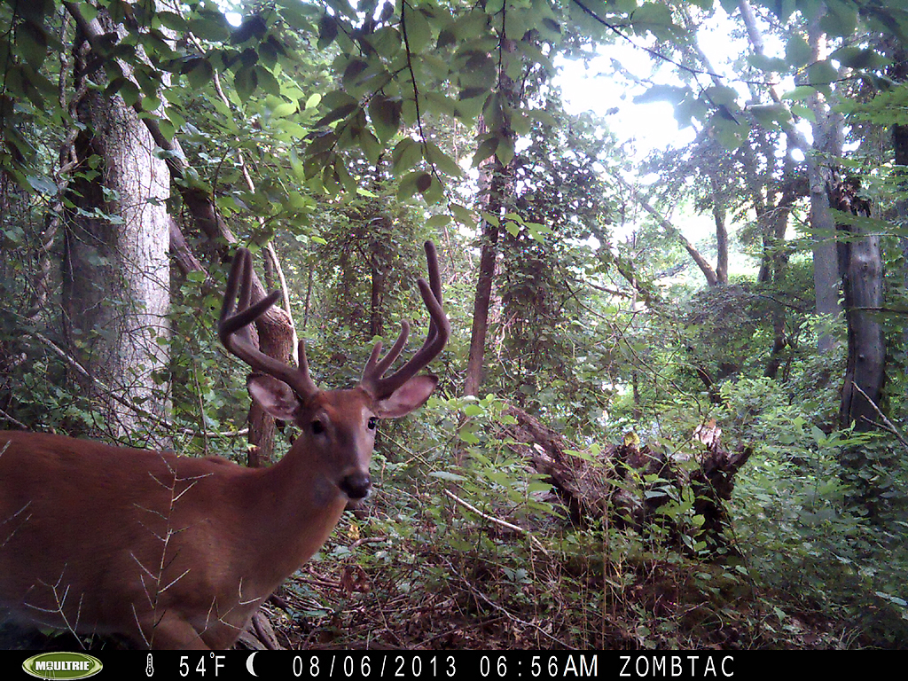 backyard trail cam pics long island deer hunting open
